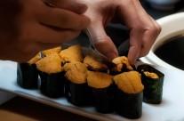 Marumi Sushi 15